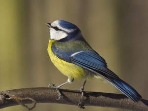 Dlaczego ptaki nie spadają z gałęzi podczas snu?